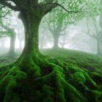 montessori-puissance-racines-esprit-absorbant